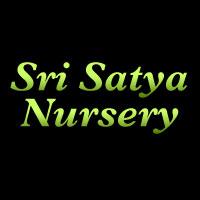 Sri Satya Nursery